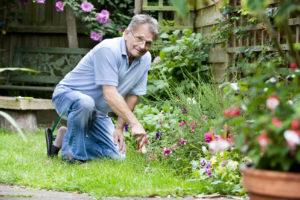 Выбор садовника: ключевые тонкости