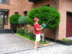 услуги садовника, садовник киев