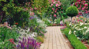 maxresdefault 300x166 - Советы опытного садовника